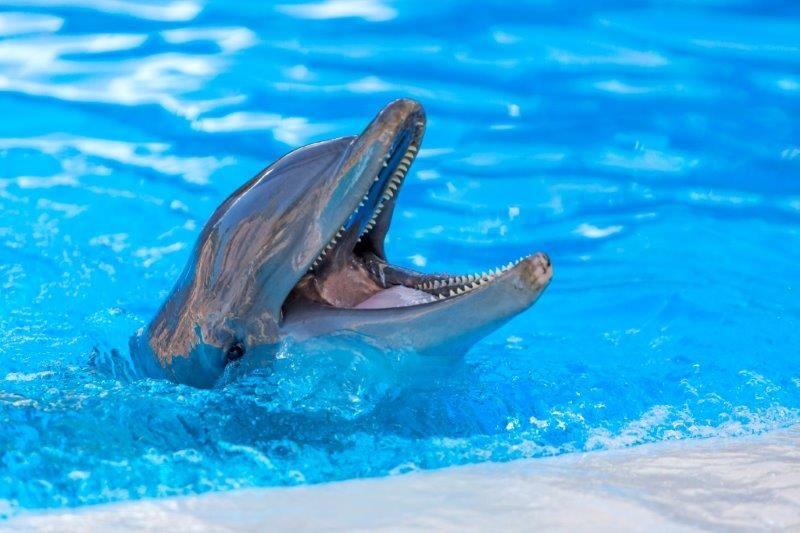 Foto de Delfín en Loro Parque