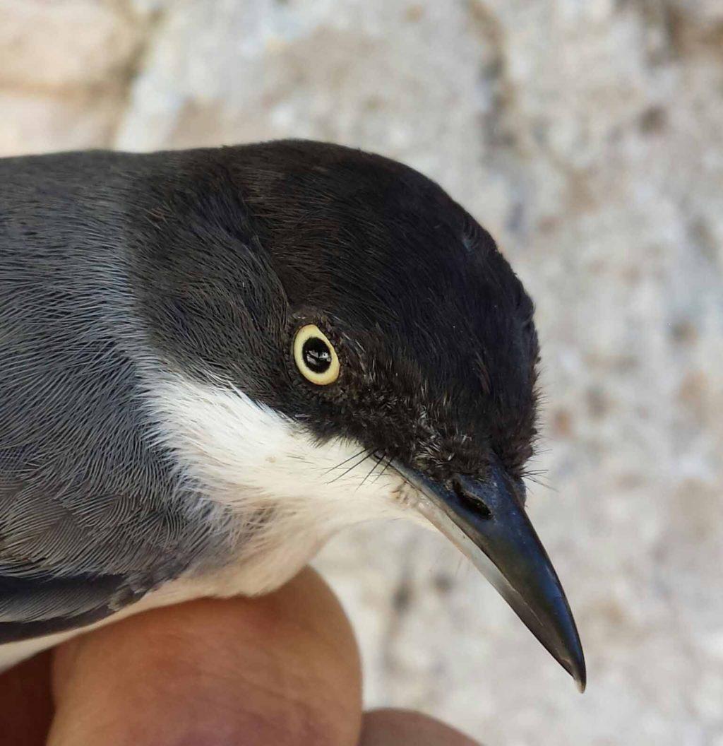 Foto de Estación de anillamiento científico de aves
